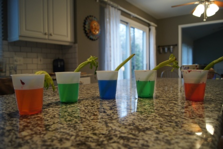 Here are all of the celery pieces with the floppy tippy-tops