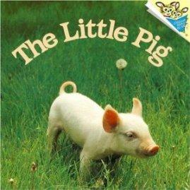 farm little pig