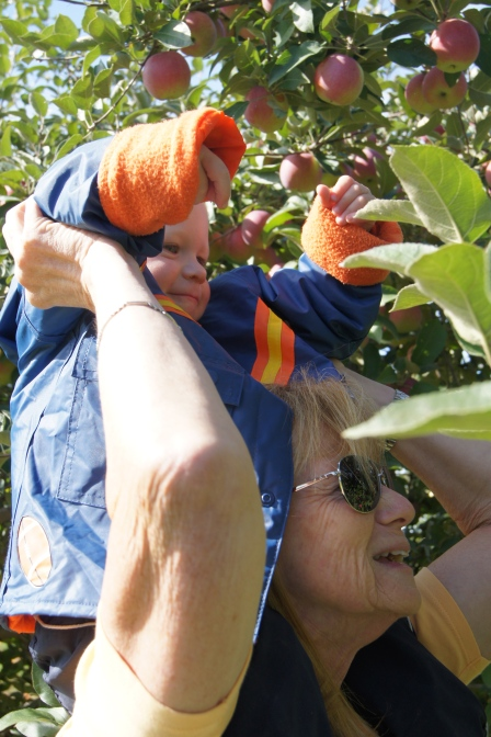 This week was all about apples! To prepare, we went apple picking.  It was tough, but somebody how to do it :)