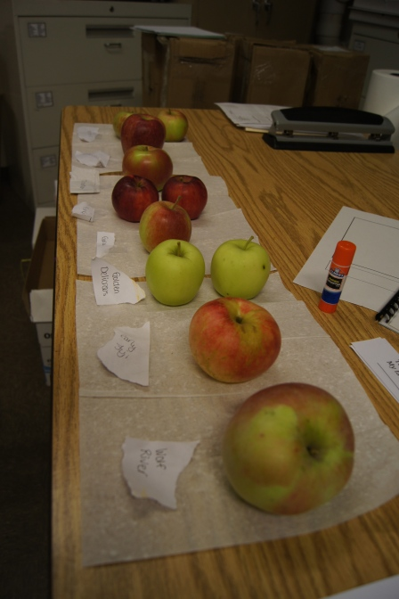 Here was our lineup.  I had eight different types of apples and an experiment sheet to record the results of our tests.