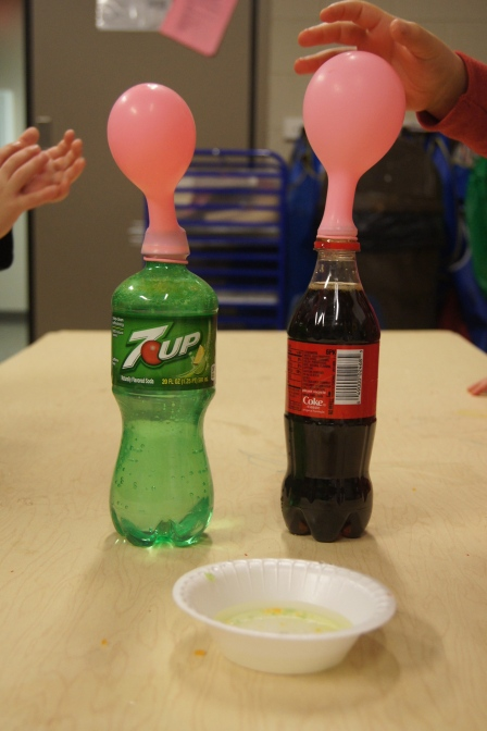 We poured the Pop Rocks into the balloons and then we attached it to the top of the pop bottles.  We then poured the Pop Rocks into the pop and watched.  Some of the kids hid in the corner of the room for the first one :)  After they saw the results, they wanted to do it again and again.  The balloons blew up.  They gently touched the balloons to feel the air.